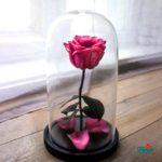 Noua colecție Floria.ro pentru început de școală:  trandafiri criogenați, pentru valori care durează